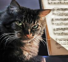 ♫ I'm A Classical Cat ♫ by Heather Friedman