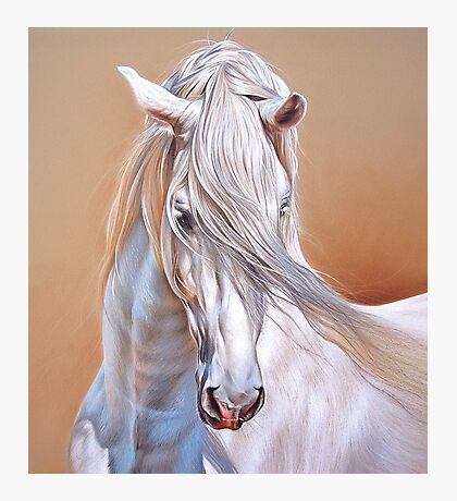 """Andalusian stallion"" - close-up Photographic Print"