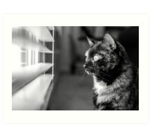 Cat looking out of window Art Print