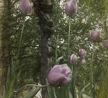 St James's Park Tulips 2 by photograham