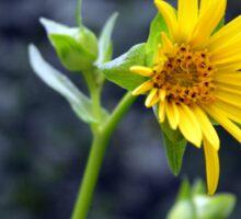 Beautiful sunny yellow flower macro. Sticker