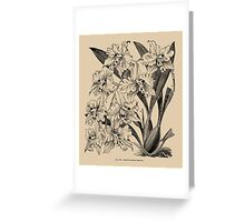 Winter Orchid Greeting Card
