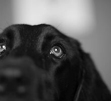 Lucy by BlackLab
