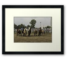 Horses at a trot Framed Print