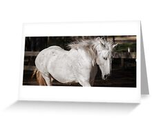 Horse in the paddock Greeting Card