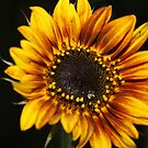 The Weaping Sunflower by IreKire
