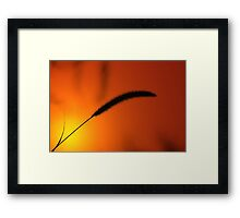 Grass Seed Sunset - Nature Background of Gold Framed Print