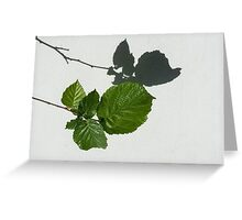 Sophisticated Shadows - Glossy Hazelnut Leaves on White Stucco - Horizontal View Left Down Greeting Card