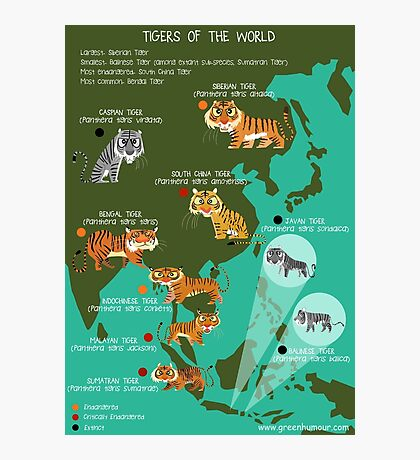 Tigers of the World Photographic Print