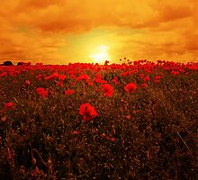 POPPY FIELD by leonie7