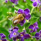 Hot Bee by Tania  Donald