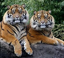 Twin brothers by Thea 65