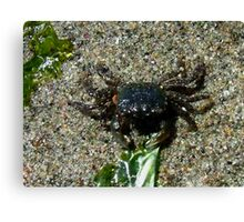 Small Crab left on the Beach Canvas Print