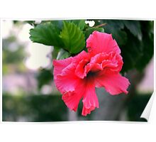 Pink Tropical Flower Poster