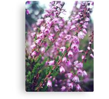 Magical heathers Canvas Print