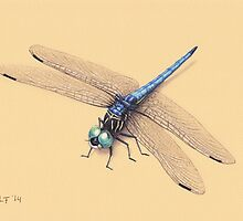 Dragonfly by LFurtwaengler