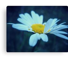Waterdrops on daisy II Canvas Print