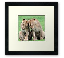 Don`t worry sis the big lions won`t hurt us!! Framed Print