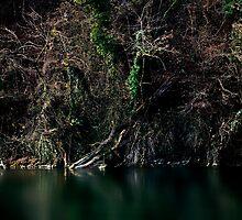 Forest at the Rhine River.........Switzerland by Imi Koetz