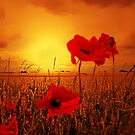 WILD ABOUT POPPIES by leonie7
