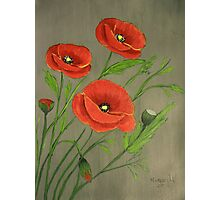 Poppies-3 Photographic Print