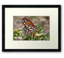 Gulf fritillary butterfly sideview Framed Print