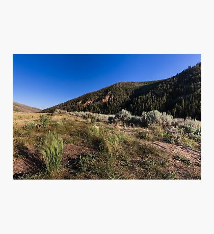 Hills with grass sagebrush and sky Photographic Print