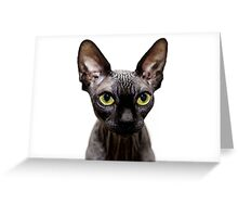 Beautiful sphynx cat with yellow eyes portrait on white background Greeting Card