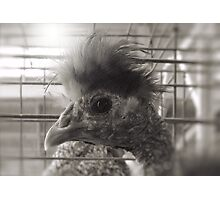 """Lil Elvis, The King of Cock and Crow""... prints and products Photographic Print"