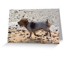 Jack Russell on Beach with Ball in Mouth Greeting Card