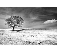 Between Earth And Sky Photographic Print