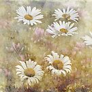 Daisy Dreams by vigor