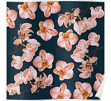 Orchid Flowers Poster
