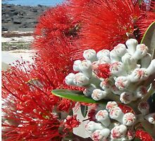 Pohutukawa on the beach by MHen