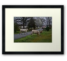 Cows Crossing the Street Framed Print