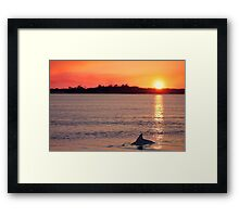 Dolphins at Sunset  Framed Print