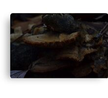 Shelves of Bark-Loving Mushrooms Canvas Print