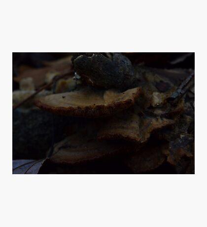 Shelves of Bark-Loving Mushrooms Photographic Print