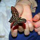 Butterfly catcher by xenxen