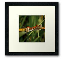Dragonflies Mating Framed Print
