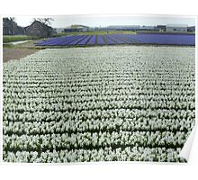 Field of white Poster