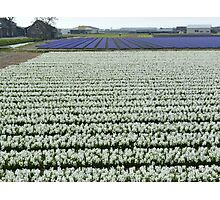 Field of white Photographic Print