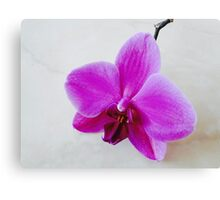 Purple Orchid On Marble I Canvas Print