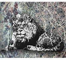 Marble Lion Statue Photographic Print