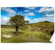 Dartmoor spring Poster