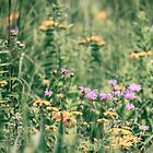 Wildflowers by jules572