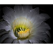 The Queen of the Night Photographic Print
