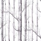 Birch by Samantha Lusher