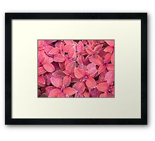 Decorative red plants Framed Print