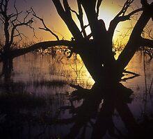 menindee sunset by Bruce  Dickson